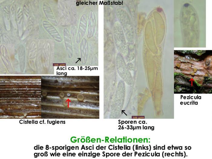 Sporen-Relationen