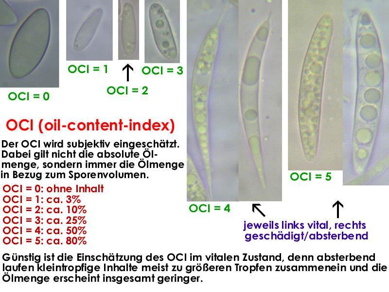 OCI-121223-MCol-01