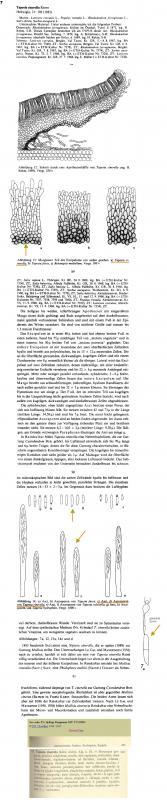 Tapesia-cinerella-Aebi+Sacc-Col