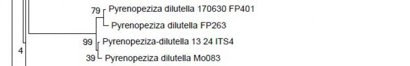 Pyrenopeziza-dilutella-170630-FP401-BaumteilJJ