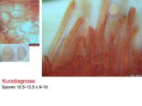 Lachnella-alboviolascens-101119-MCol-01