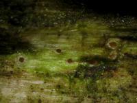 Gruben-Höhlenbecherchen