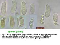 Dacrymyces-lacrymalis-130113-JAM-MCol-01JJ