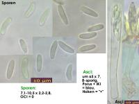 Mollisia-cinerea-130401-MCol-01JJ