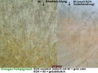 Arachnopeziza-trabinelloides-140215-Annam-MCol-04JJ