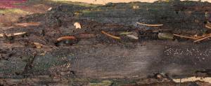 Eichenholz finalmorsch