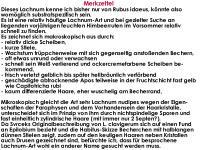 Lachnum-clavigerum-(Rubus-idaeus)-150614-MCol-06JJ