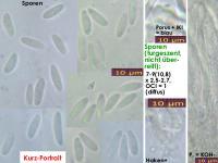Mollisia-cinerea-151205-TR-MCol-01JJ