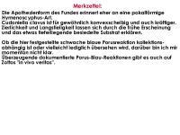 Cudoniella-clavus-160310-WS-MCol-04JJ