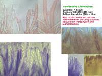 Info-Faerbemittel-Hymenoscyphus-(Aj+PVak)-160811gr-JJ