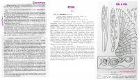 Pyrenopeziza-artemisiae-Orig-JJ