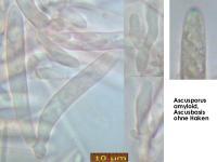 Olla-scrupulosa-170806-MCol-02JJ