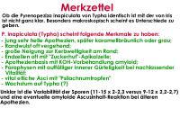 Pyrenopeziza-inapiculata-(Typha)-180708-TR-iw027-MCol-09JJ