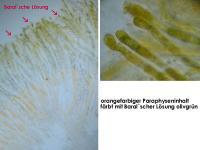 Miladina-lecithina-180826-WS-iw034-MCol-04JJ