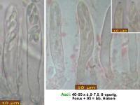 Olla-scrupulosa-181223-iw052-MCol-02JJ