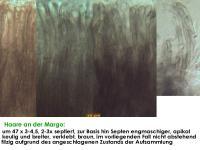 Mollisia-elegantior-210321-CaTh-MCol-04JJ