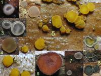 Substrat-Brombeere